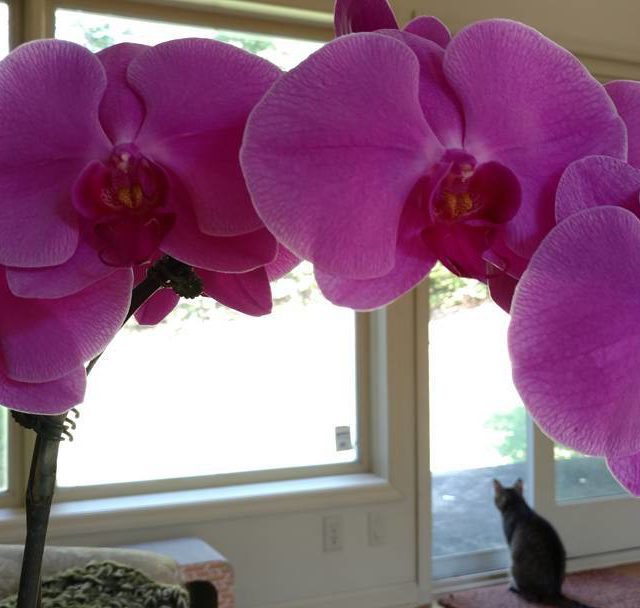 My parents gave us these stunning orchids to help easehellip