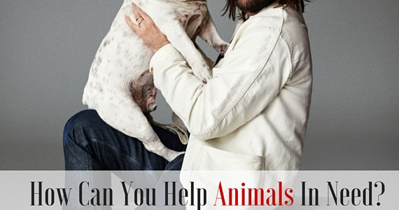 How Can You Help Animals In Need? Listen To These Celebs (Giveaway)