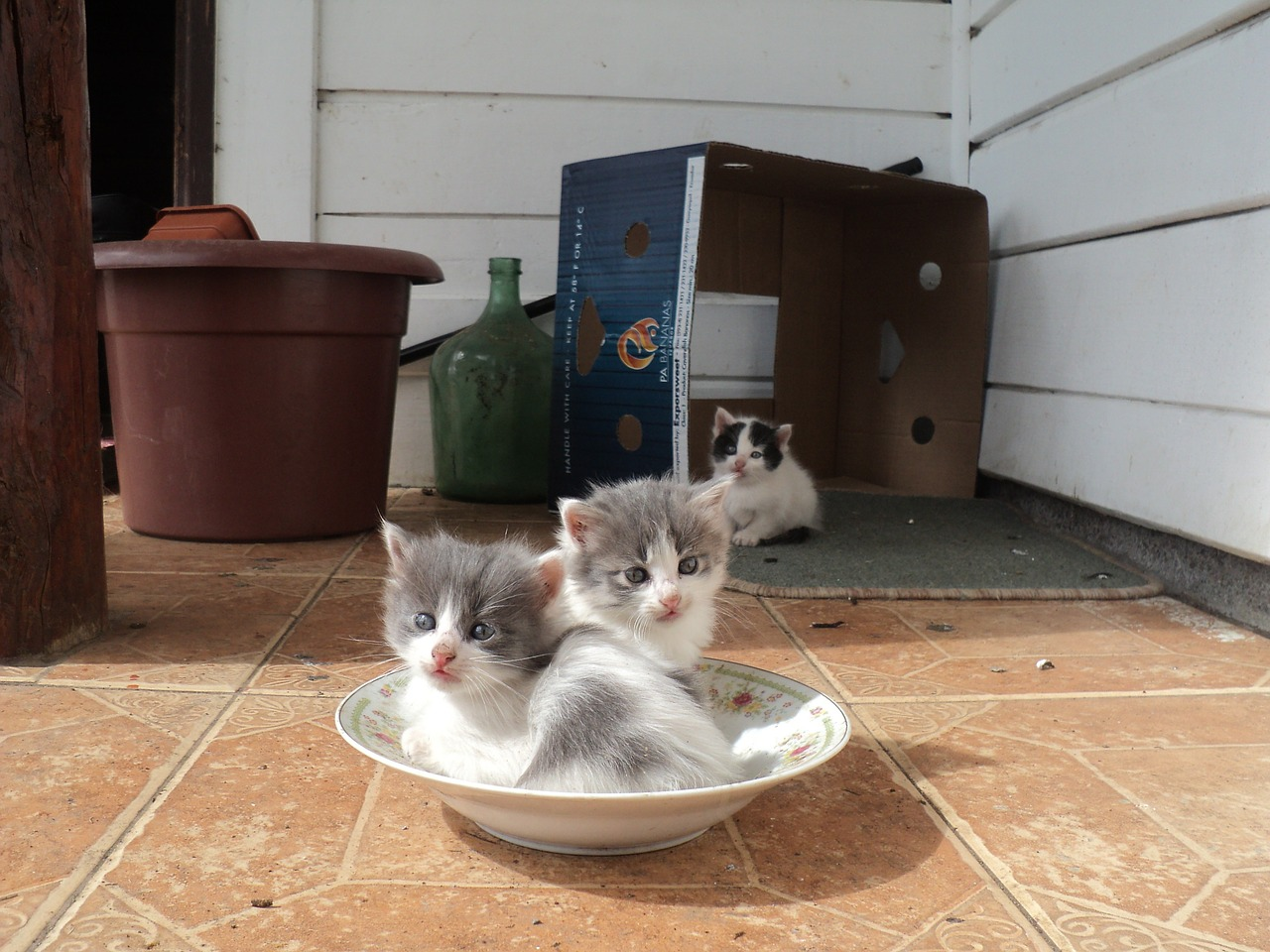 recommended kitten food