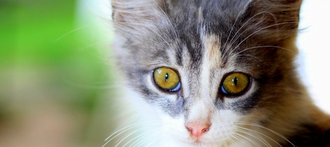 A Chance To Adopt: Biggest Cat Expo Comes to New Jersey This Weekend