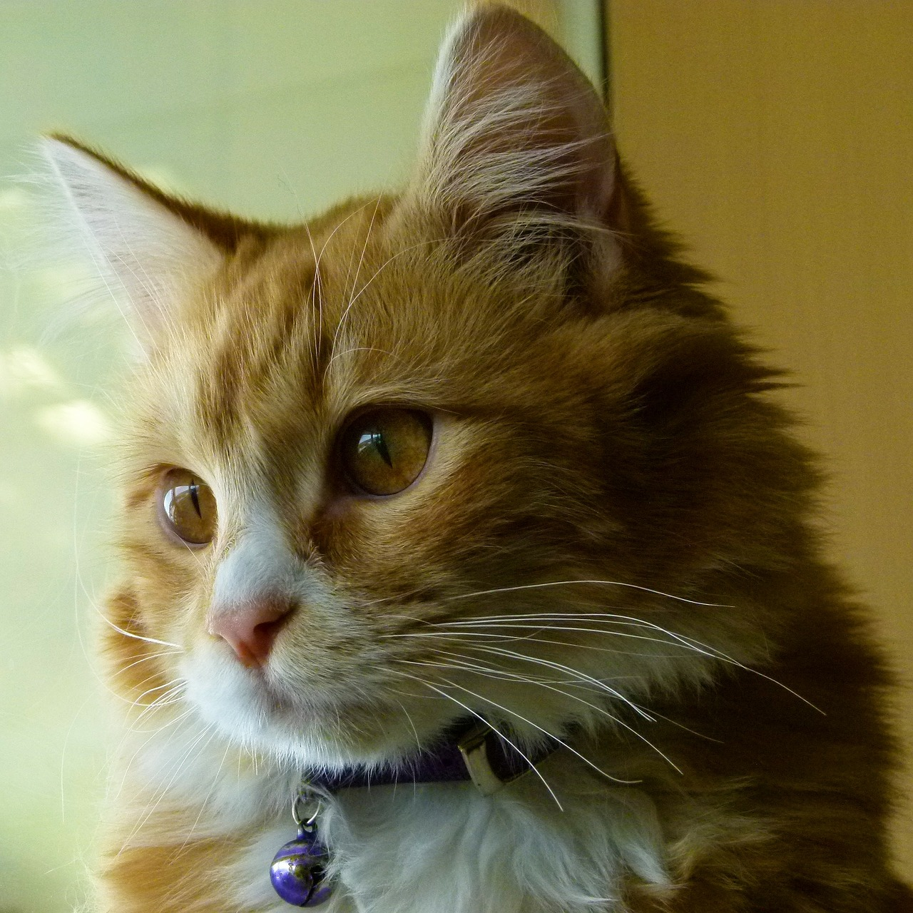 A chance to adopt biggest cat expo comes to new jersey - Garden state exhibit center somerset nj ...