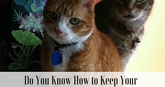 Do You Know How To Keep Your Pets Safe This Summer? (Giveaway)